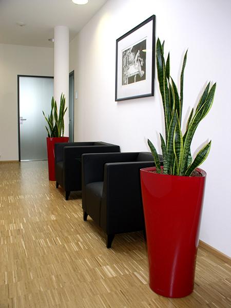 Innenraumbegrünung - Bürosituation