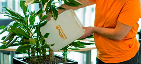 Pflanzen-pflegedienst